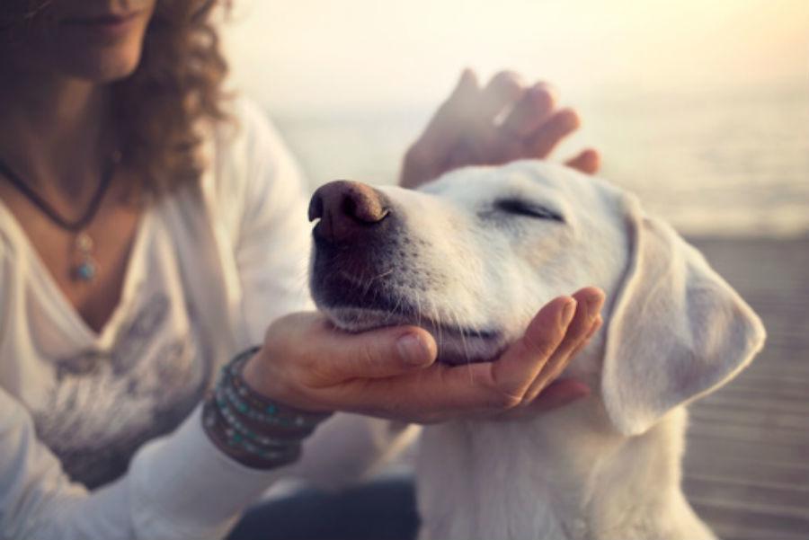 Cum detinerea unui caine sau a unei pisici poate reduce stresul