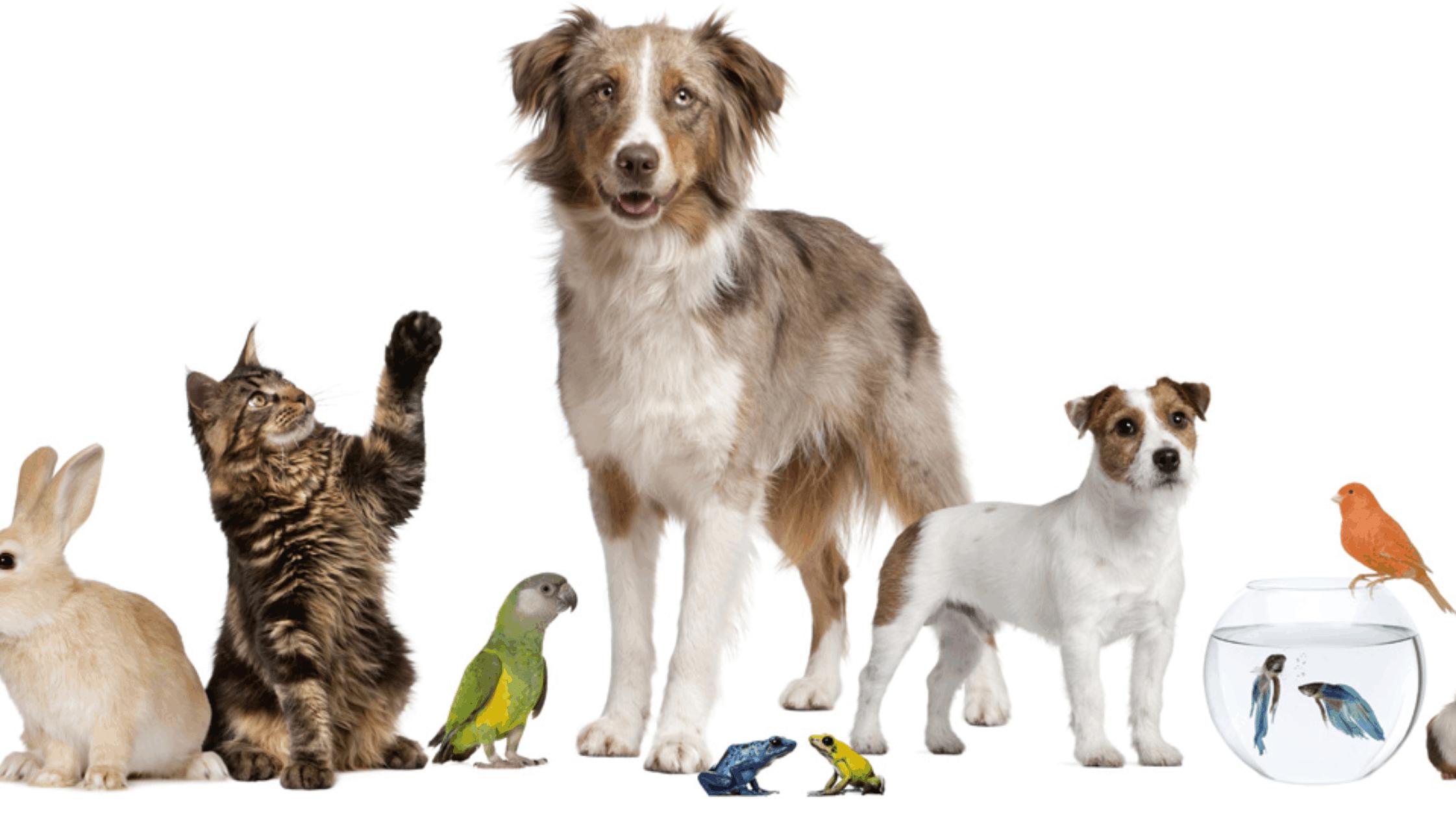 Care sunt cele mai populare animale de companie din lume?