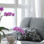 Cum sa ai grija de o orhidee: trucuri si curiozitati pe care ar trebui sa le cunosti